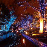 Holiday-Lights-1